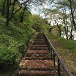 お花見BBQもできる!津久井湖 城山公園を散策してきた!