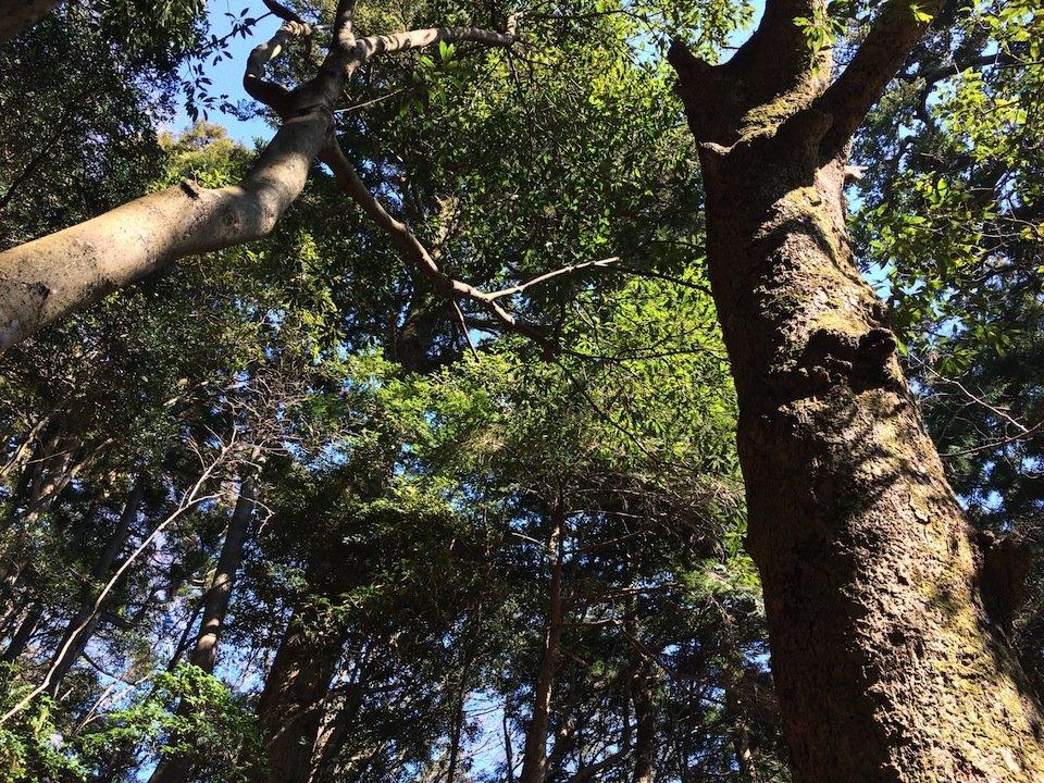 常緑樹のあるコース