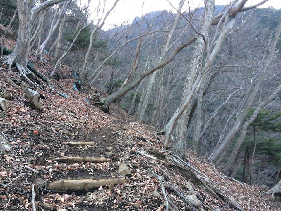 キャンプ場近くの自然林