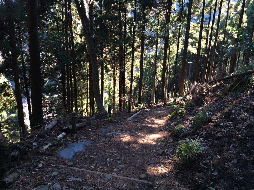 大山の杉林