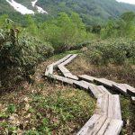 白馬を歩く!長野 栂池高原自然園を観光してきた!
