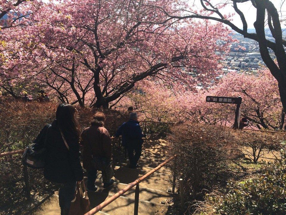桜林への入り口