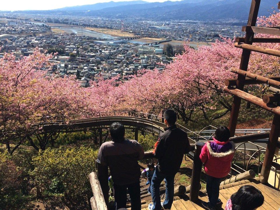 桜並木を突っ切る滑り台