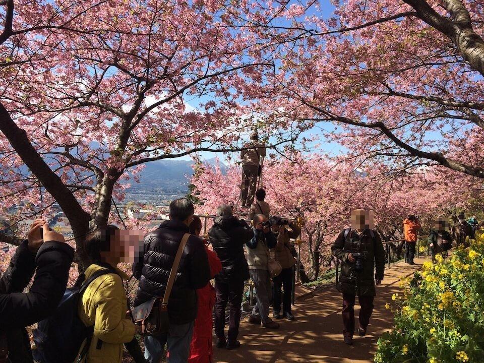 桜撮影用の脚立