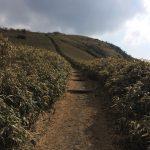 富士山も海も見えるハイキングコース!西伊豆 達磨山へ行った!