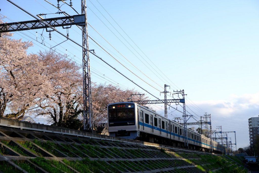 小田急線と桜