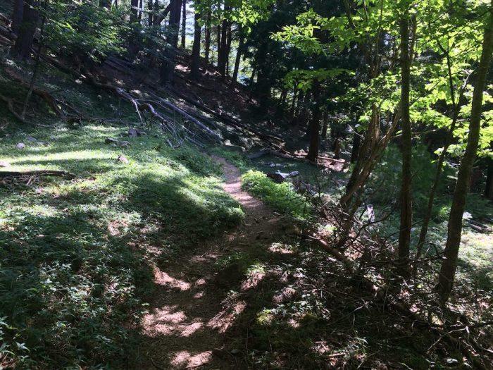 アップダウンの緩やかな登山道