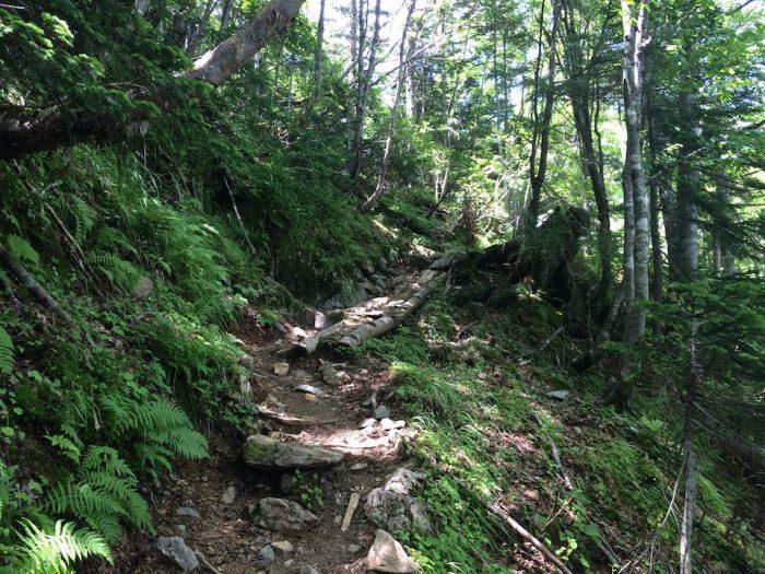 聖岳の樹林帯