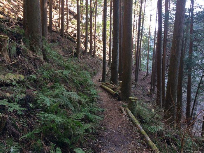 植林の続く道