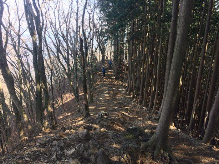 植林と雑木林の間の尾根