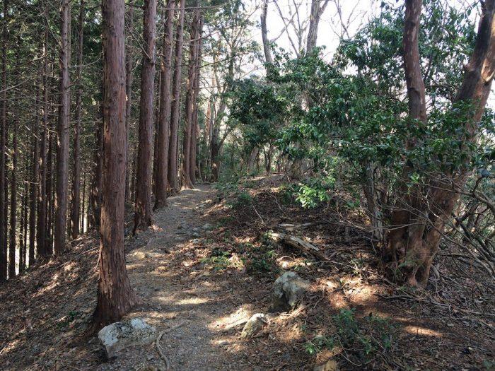 植林の下山ルート