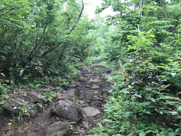 植物に囲まれた登山道