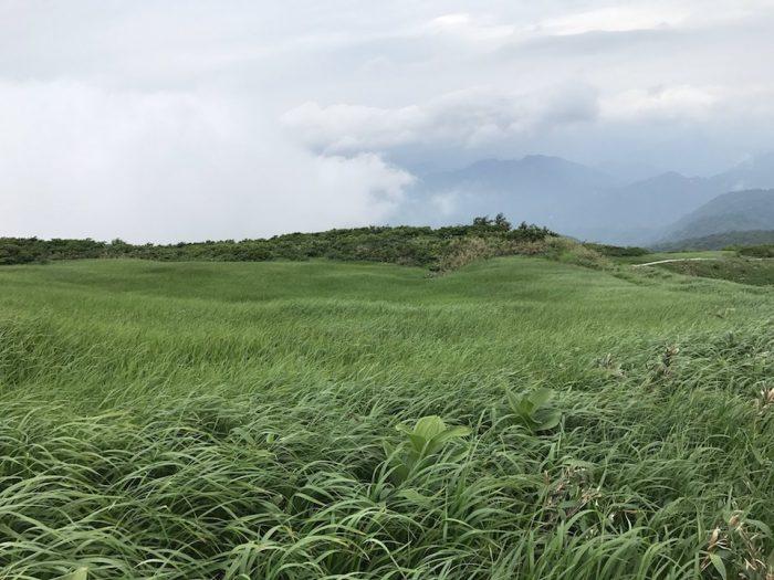 浅草岳山頂の草原