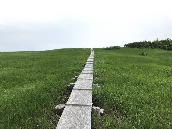 草原と木道