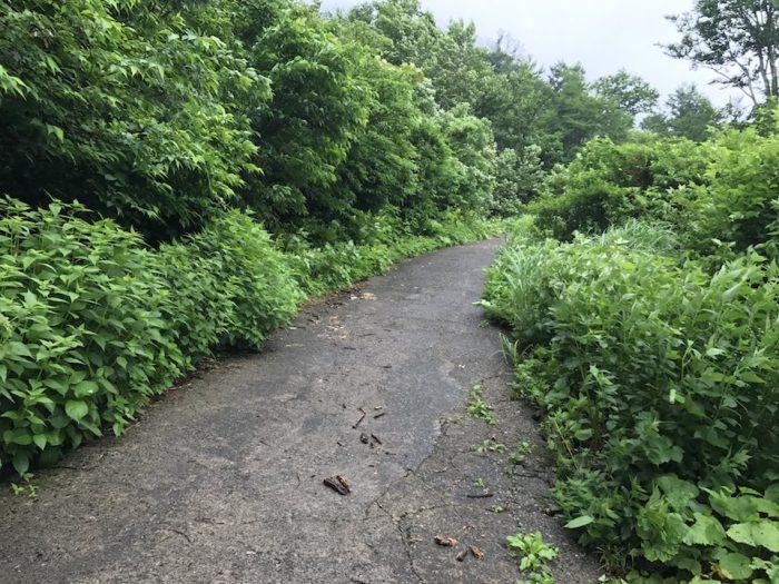 桜ゾネからネズモチ平へ続く舗装路