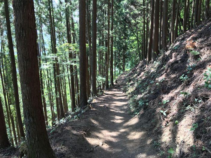 植林の登山道