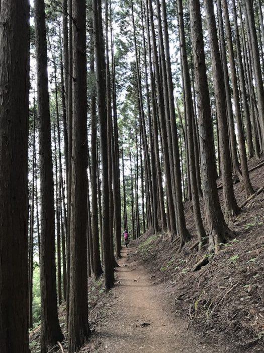 雲取山の平坦なハイキングコース