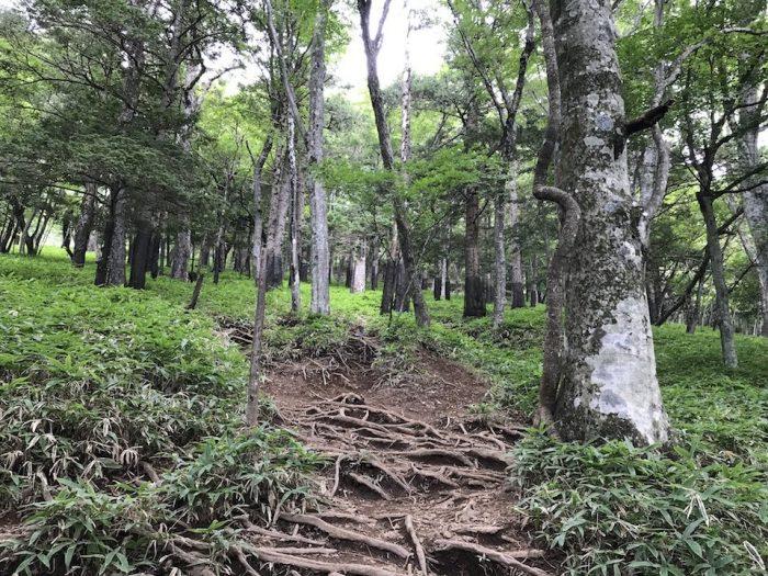 ササに囲まれた登山道